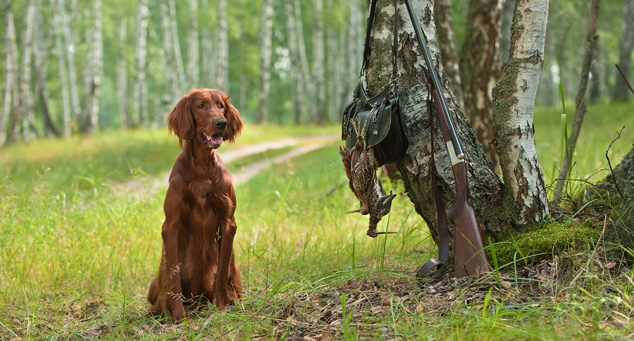 Deer hunting dog breeds - photo#1
