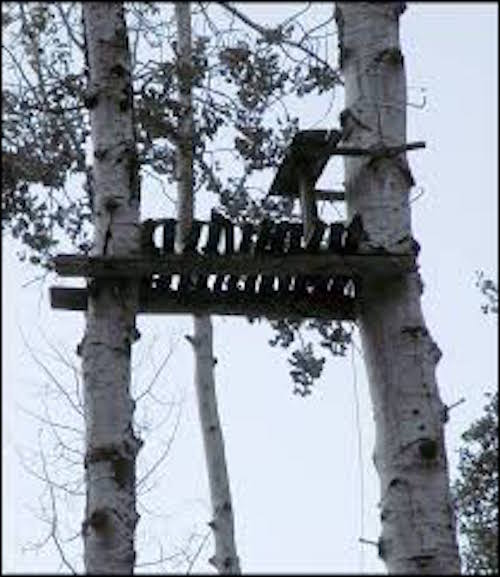 old treestands
