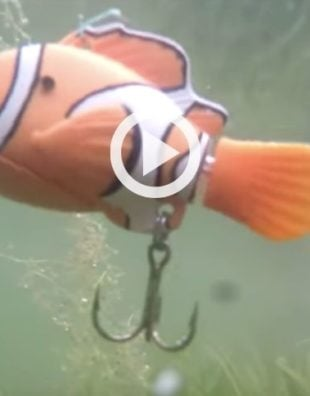 nemo fishing lure