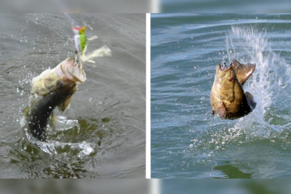 Largemouth vs Smallmouth